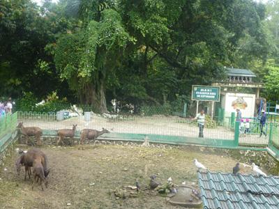 sumatera0315.jpg