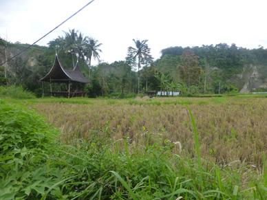 sumatera0337.jpg