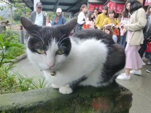 taiwan21133.jpg